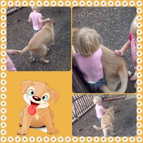Bekkie en Lala speel met die bure se hond