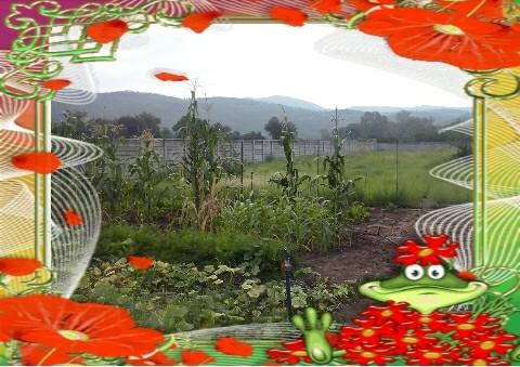 Ons groentetuin