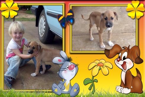 Ons nuwe hondjie Diego